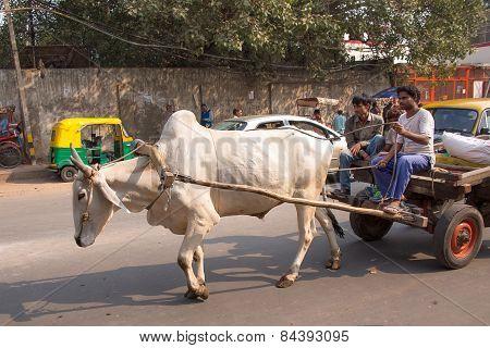 Delhi, India - November 5: Unidentified People Ride In Bullock Cart On November 5, 2014 In Delhi, In