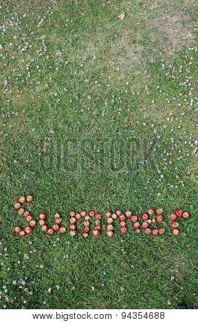 The Word Summer Spelt in Strawberries
