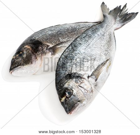 Two fresh dorado fishes (Sparus aurata L.) isolated on white background.