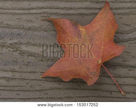 Red maple leaf on brown boards with stem on diagonal from lower right corner