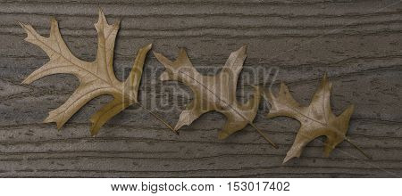 Three brown oak leaves in a diagonal row on brown boards