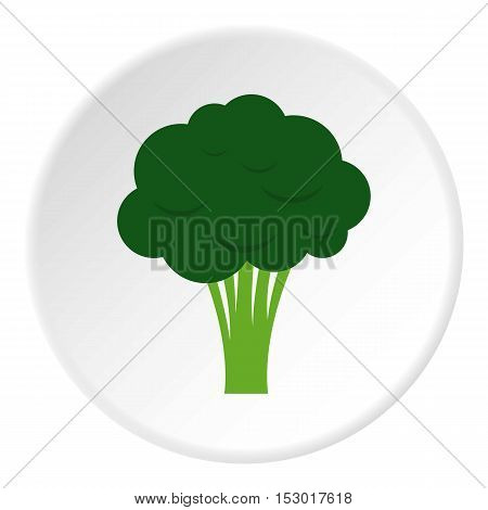 Broccoli icon. Flat illustration of broccoli vector icon for web