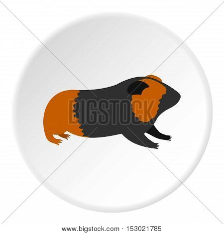 Hamster icon. Flat illustration of hamster vector icon for web
