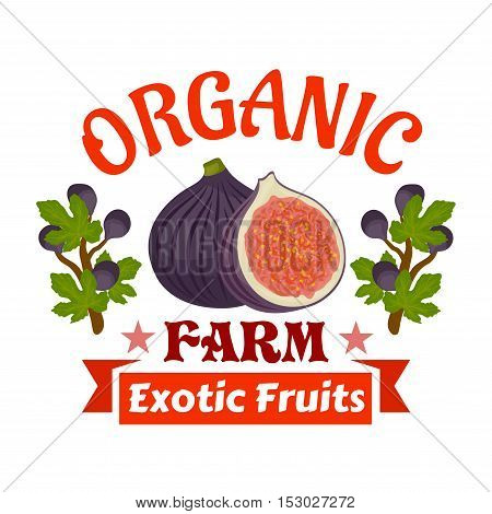 Figs. Farm organic exotic fruits emblem. Vector icon of whole and half cut fig fruit with fig tree branches. Label for vegetarian product sticker, grocery farm store
