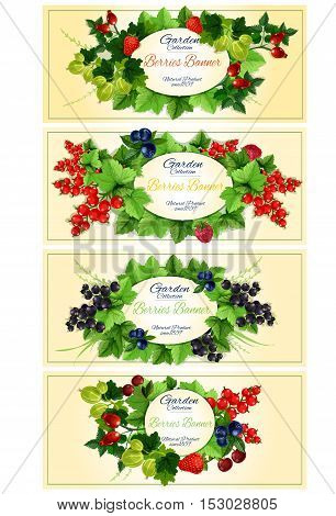 Garden berries fruits banners. Vector design of garden berry with leaves strawberry, dog-rose fruits, red currant, blackcurrant, strawberry, gooseberry