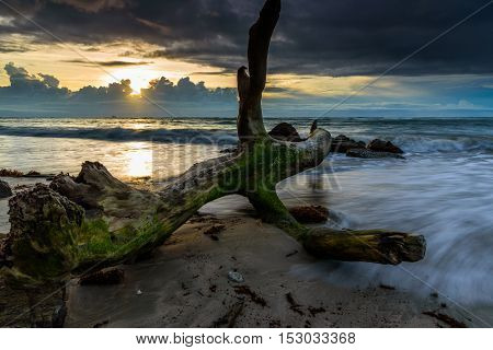 The dead wood was wash away by the currents to the UMS International Campus Labuan during sunset