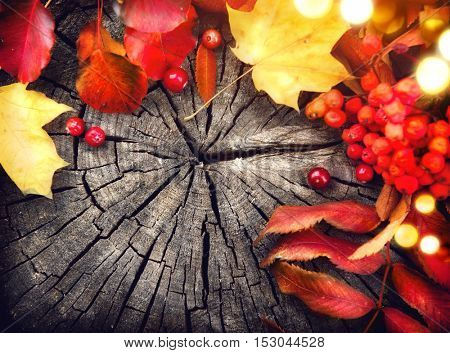 Thanksgiving background design. Autumn leaves and cranberries over cracked wooden background. Frame border design with space for your text. Thanksgiving wood table decorated with bright autumn leaves