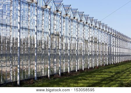 Greenhouse in the municipality Westland in the Netherlands