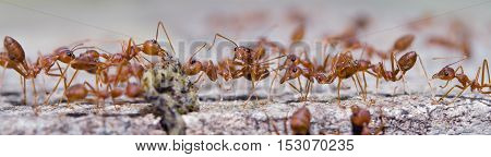 Group of ants are getting the food with blurred background