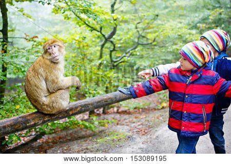 Two little kids boys in colorful clothes, watch monkey show in the zoo and feeding animals on a cold autumn day. Happy children watching animals in safari park.