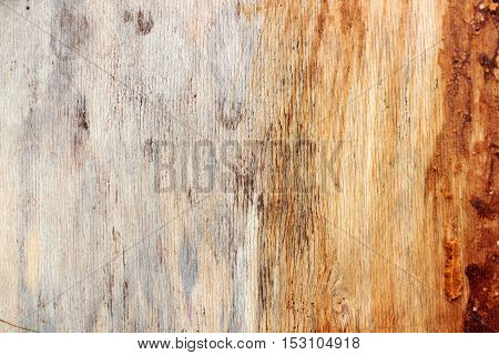 the old plywood with remnants of paint