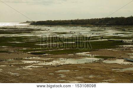 low-tide at the beach of nusa Lembongan