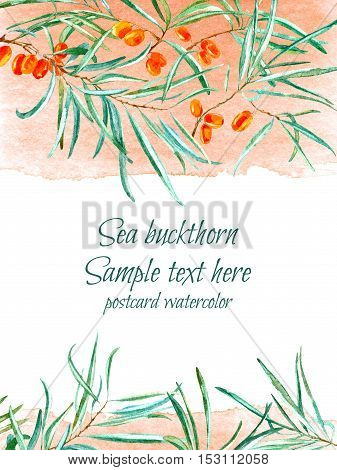 Sea buckthorn postcard.Floral frame and watery stain illustration.Watercolor hand drawn image.white background.