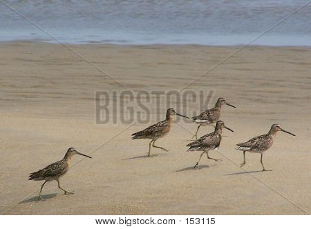 Sandpiper Run