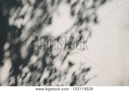 tree shadow on the white concrete wall pattern