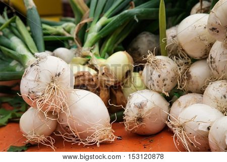 White Fresh Onions In Market