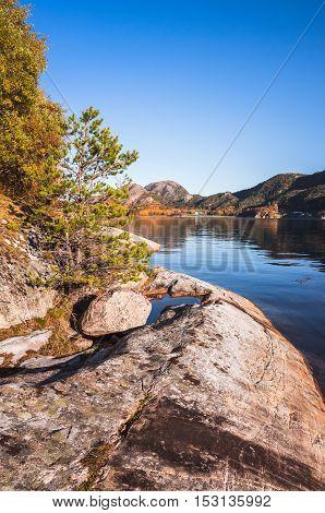 Pine Trees Growing On Rocks, Norway
