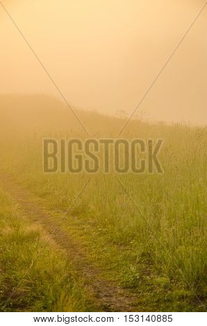 thick morning fog in the summer forest. thick morning fog in the forest at pond. Morning landscape in summer thick fog. dense fog in the morning.  early morning. forest hiding in the fog. forest path
