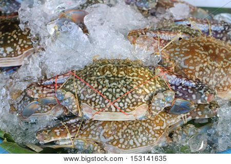 Flower crab Blue crab Blue swimmer crab Blue manna crab Sand crab Portunus pelagicus Portunus or Sand crab at market