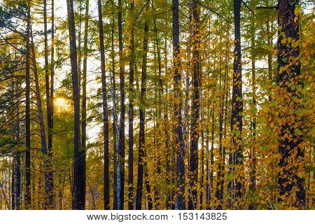 Thickets of mixed autumn forest with sunlight