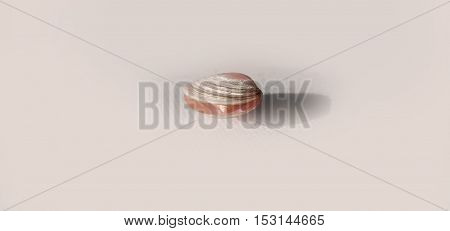 Beautiful Seashell with small seashell inside on a background