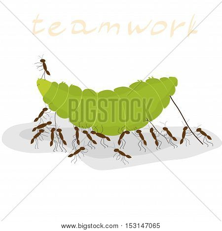 many ants dragging a green caterpillar on a white background, inscription teamwork
