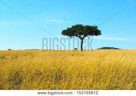 Park Masai Mara
