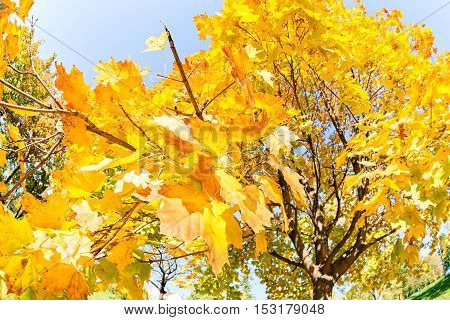 Autumnal Treetop