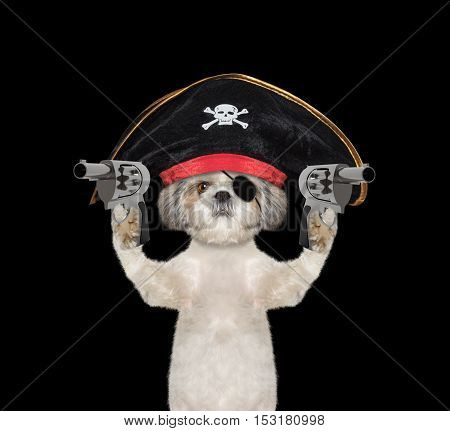 dog in a pirate costume with guns -- isolated on black