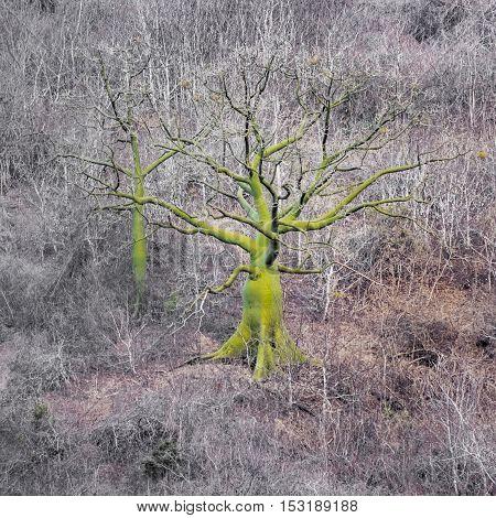 Exotic Tree At Meadow Guayas Ecuador