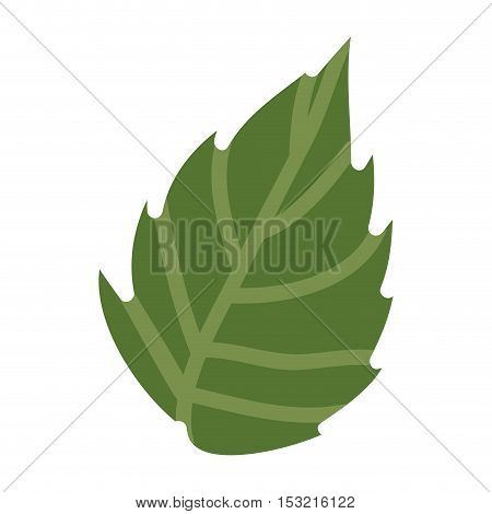 green Leaf plant icon. Nature floral garden and decoration theme. Isolated design. Vector illustration
