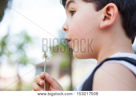 Boy in park playing with dandelion seeds