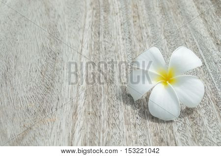The Tropical flowers frangipani on wood background