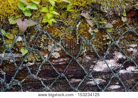 Close-up of old fish net draped over moss and lichen covered log on the coast of British Columbia.