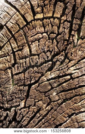 Old Tree Trunk 2