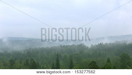 Morning fog in siberian forest. Rain taiga landscape