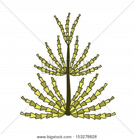 Single yellow and green horsetail on a white background.
