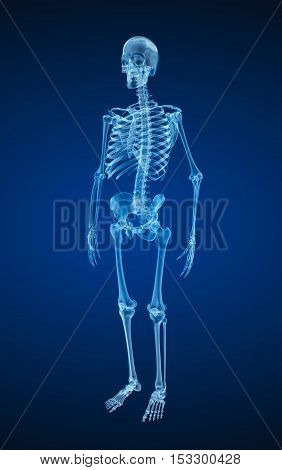Human skeleton xray view. Medically accurate 3d illustration .