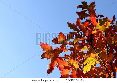 Branches with autumn leaves against the sky