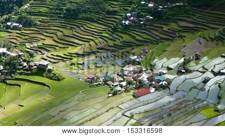 Batad Rice Terraces, UNESCO Heritage, Central Luzon Philipines, Southeast Asia poster