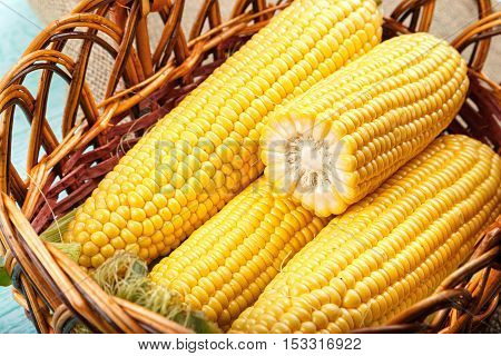 Natural food. Basket of fresh sweetcorn husked