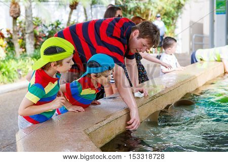 Young father and two little kid boys feeding rays in a recreation area. Man and his sons preschool children having fun with observing fishes.