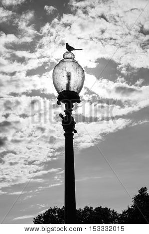 Bird on top of a lamppost in Washington DC