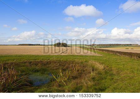 Bridleway And Dew Pond