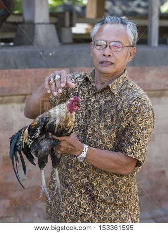 Bali Indonesia September 1oth 2016: balinese men with a rooster