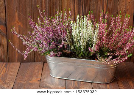 Heathers in a metal flowerpot on wooden boards