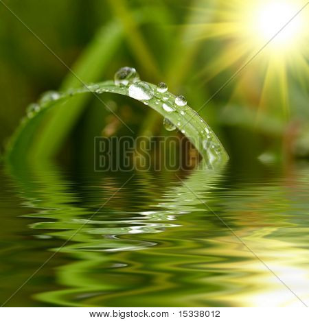 Green grass with raindrops background