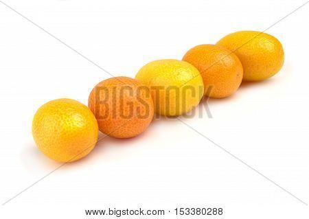 Group of fresh fruit kumquat in row on a white background.
