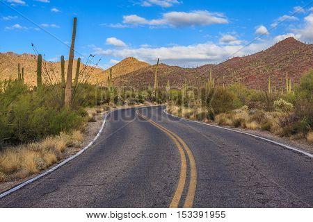 Amazing Image of Saguaro National Park in Arizona