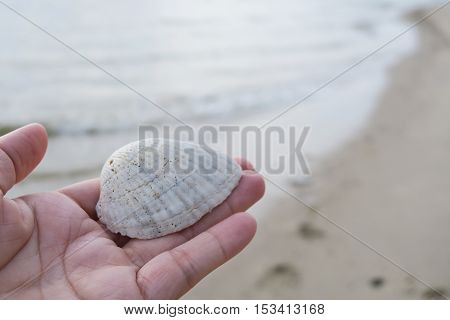 Shell in hand. Holding shell background. Shell in hand on the beach